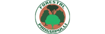 Forestal Panguipulli
